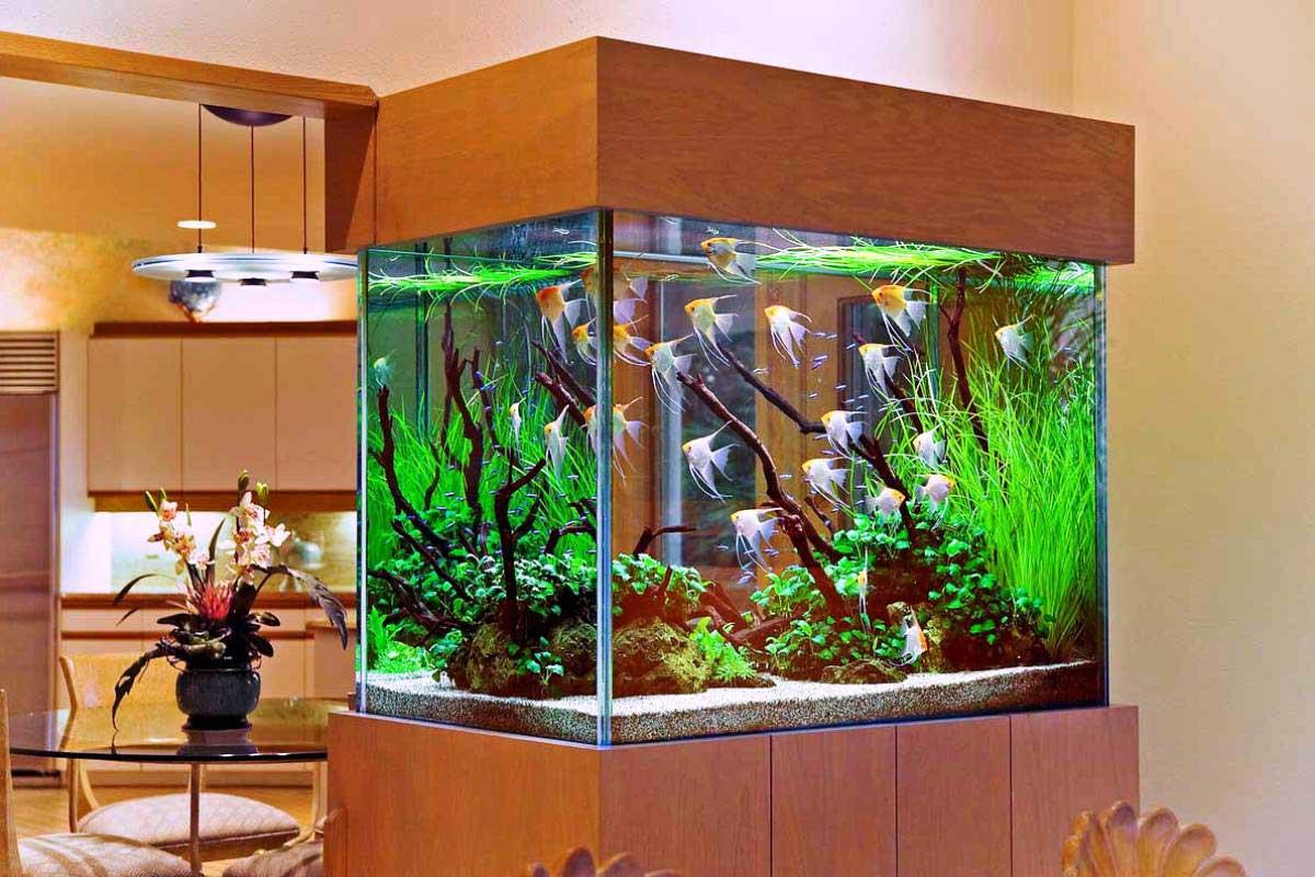 Фото дизайна аквариумов с рыбками