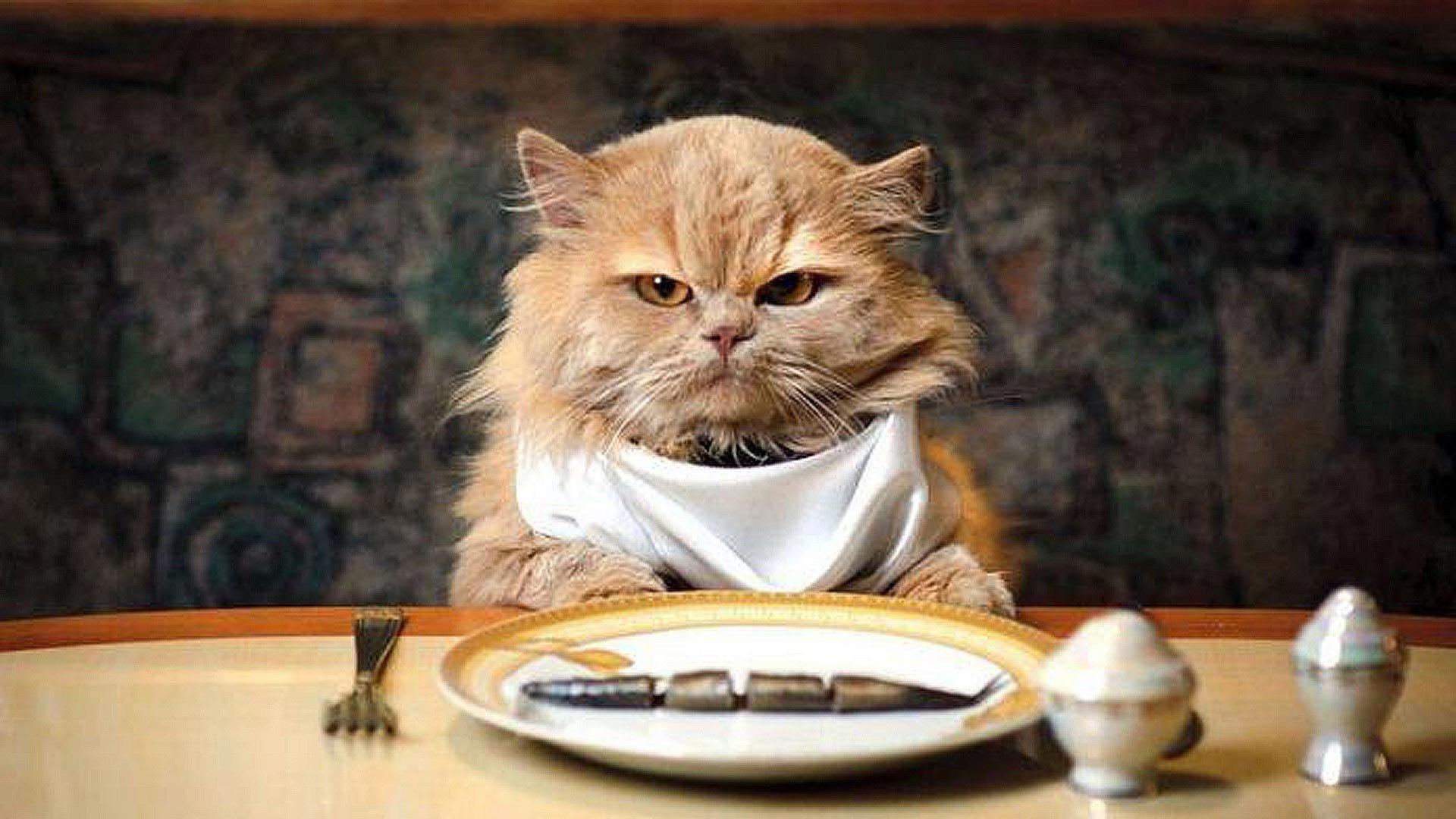 Коту для мышечной массы