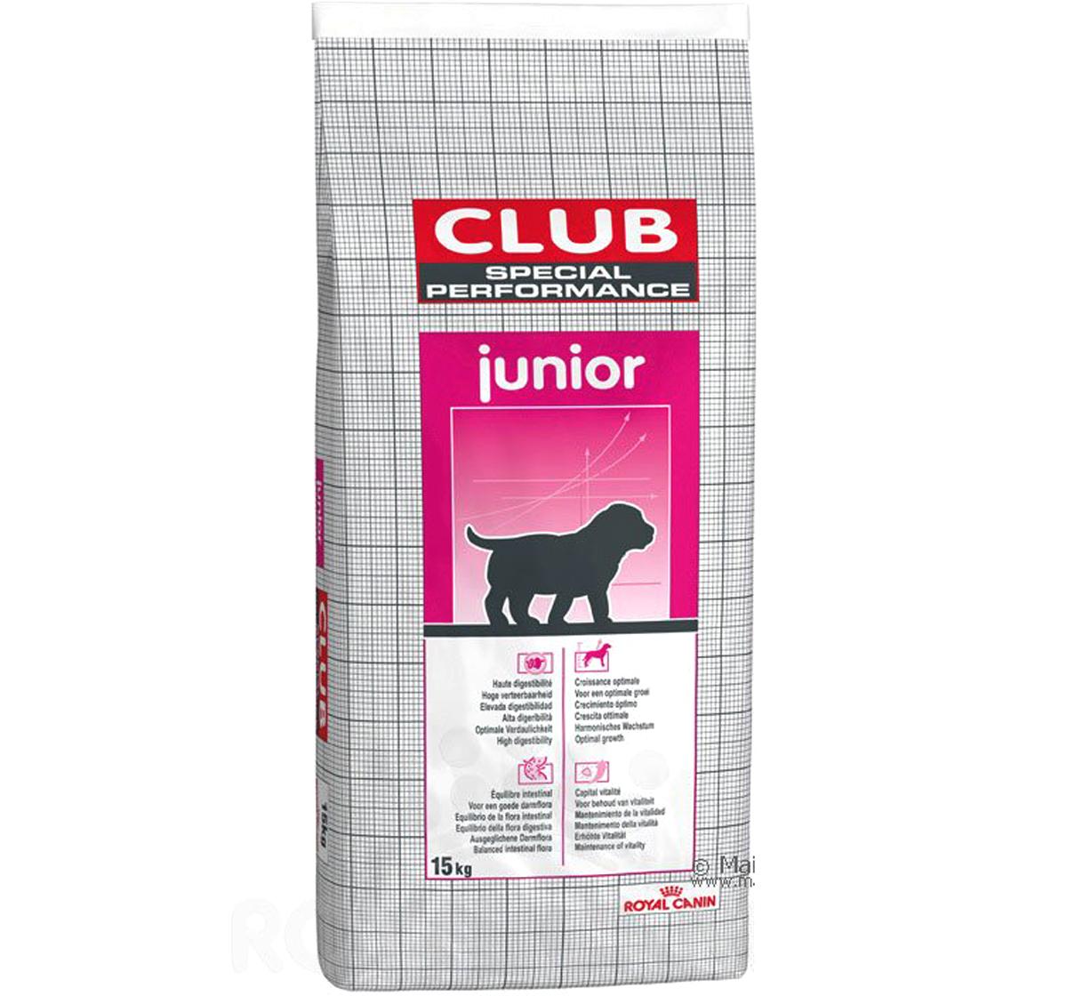 Как безопасно вывести блох у котенка 1–2 месяцев в